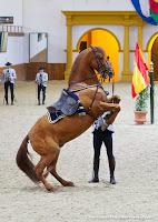 Andalusian kuninkaallinen hevoskoulu Jerez_Andalusian Royal Equestrian School Jerez_10