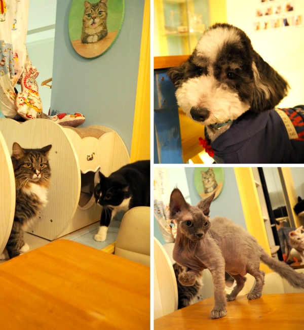 bar à chats à paris