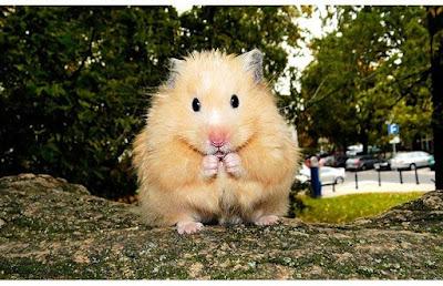 Masum-Hamster-Kafesleri