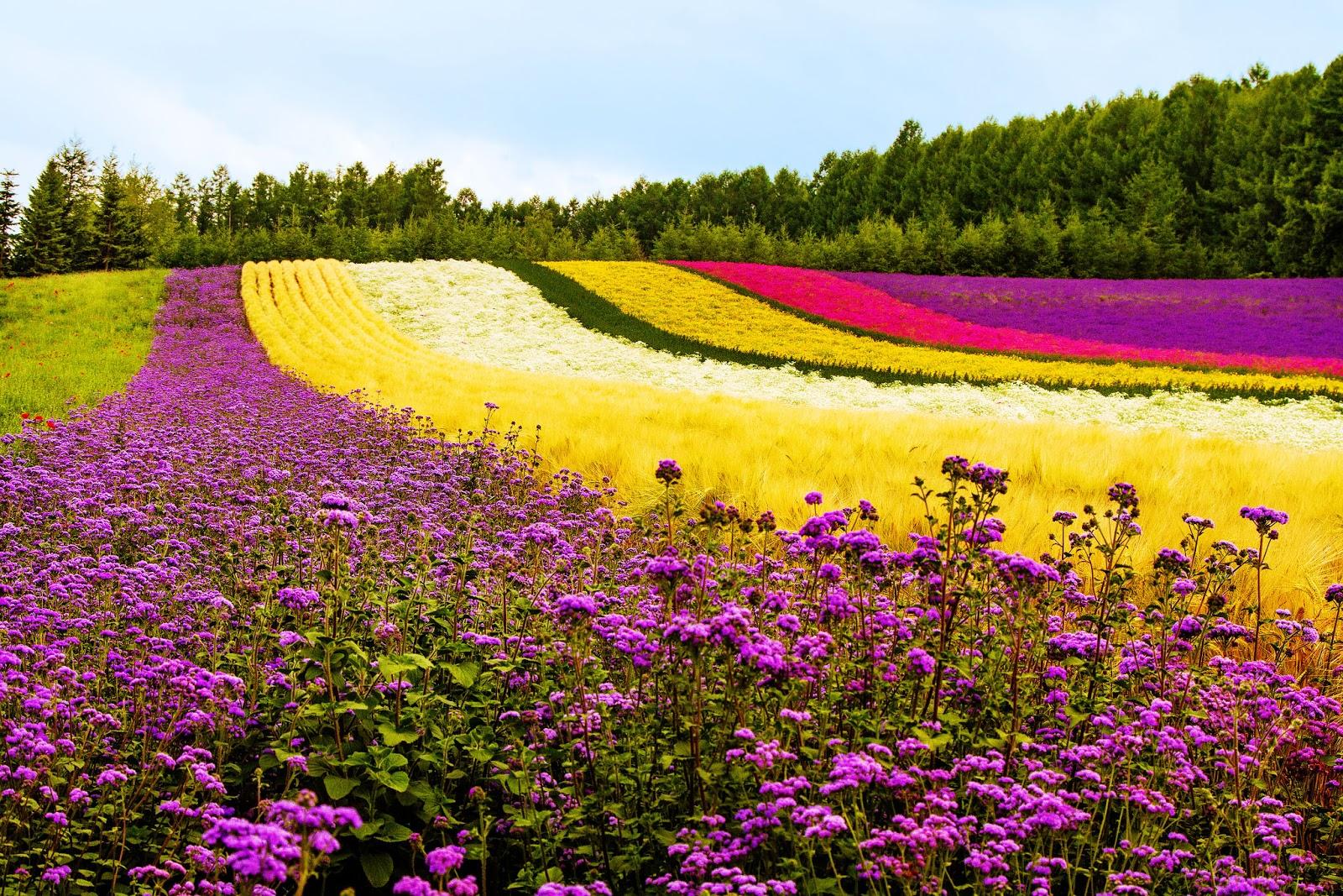 japan travel bucket list where to go