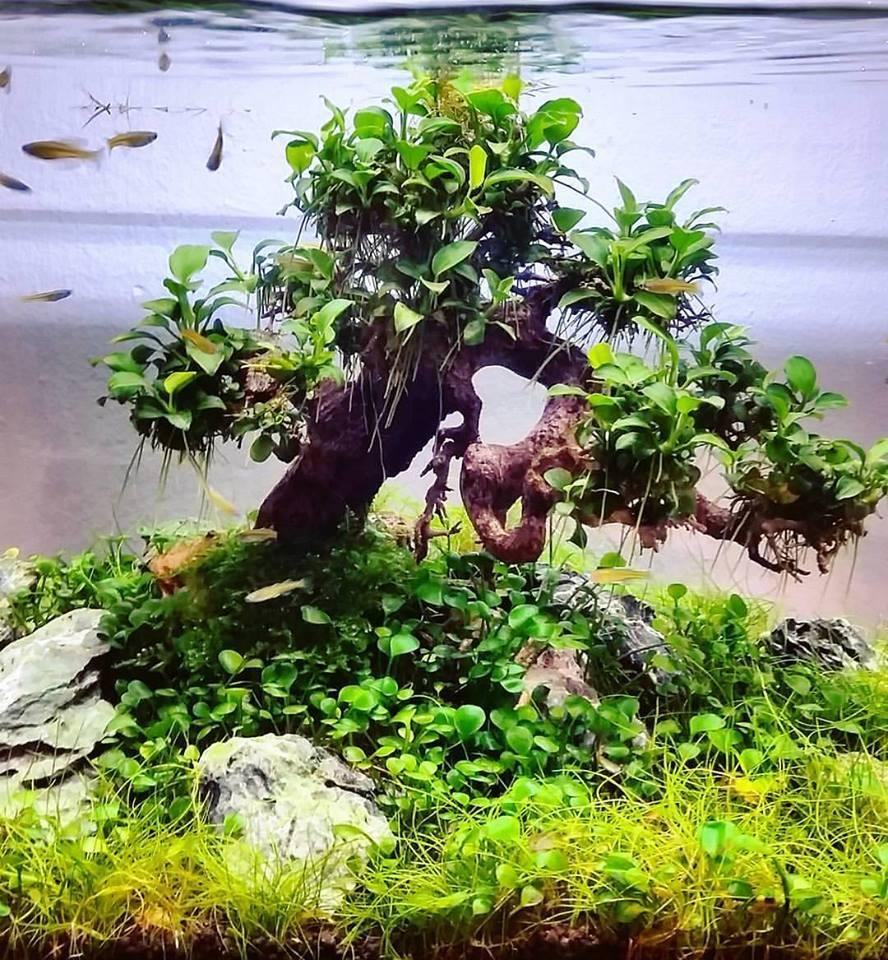 Một bể thủy sinh có cây cỏ bợ 4 lá của tác giả Filipe Oliveira