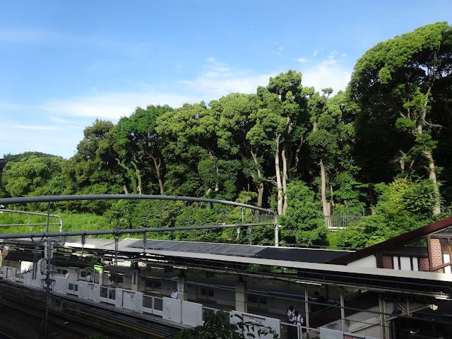 森林,原宿駅より,明治神宮〈著作権フリー無料画像〉Free Stock Photos