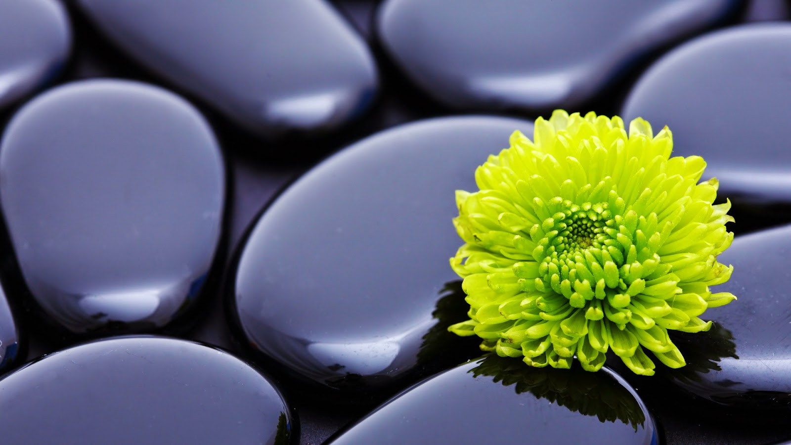 Chinese zen meditation pictures 1080p full hd widescreen wallpapers 1920x1080 zen flower on black stones pictureg voltagebd Images