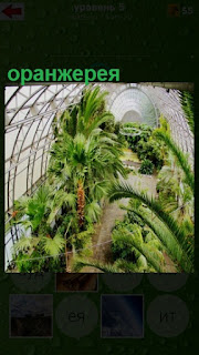 в оранжерее растут несколько любопытных растений