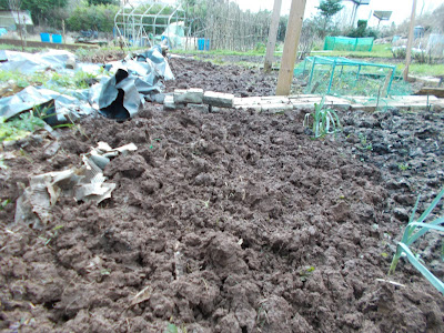 Weed free vegetebale patch 80 Minute Allotment Green Fingered Blog