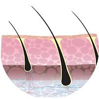 Scalp (kulit kepala)