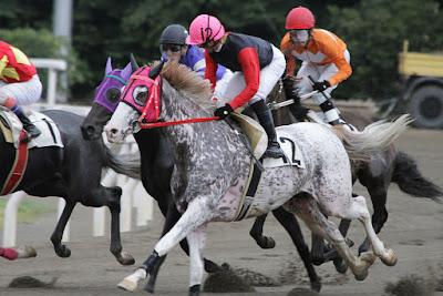 Amazing Race Horse