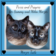Prayers needed for Sammy and Miles Meezer.