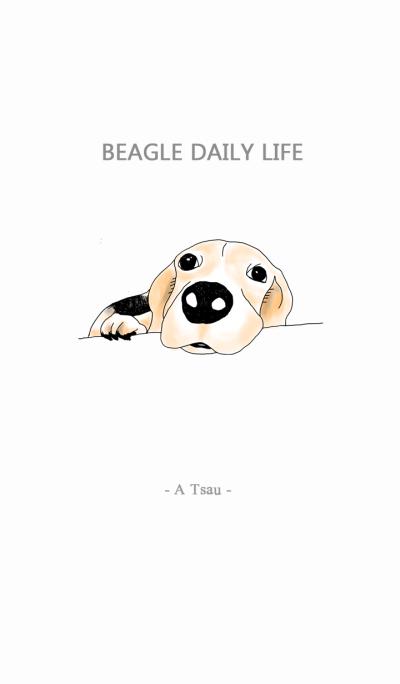 Beagle Daily Life 2 - A Tsau