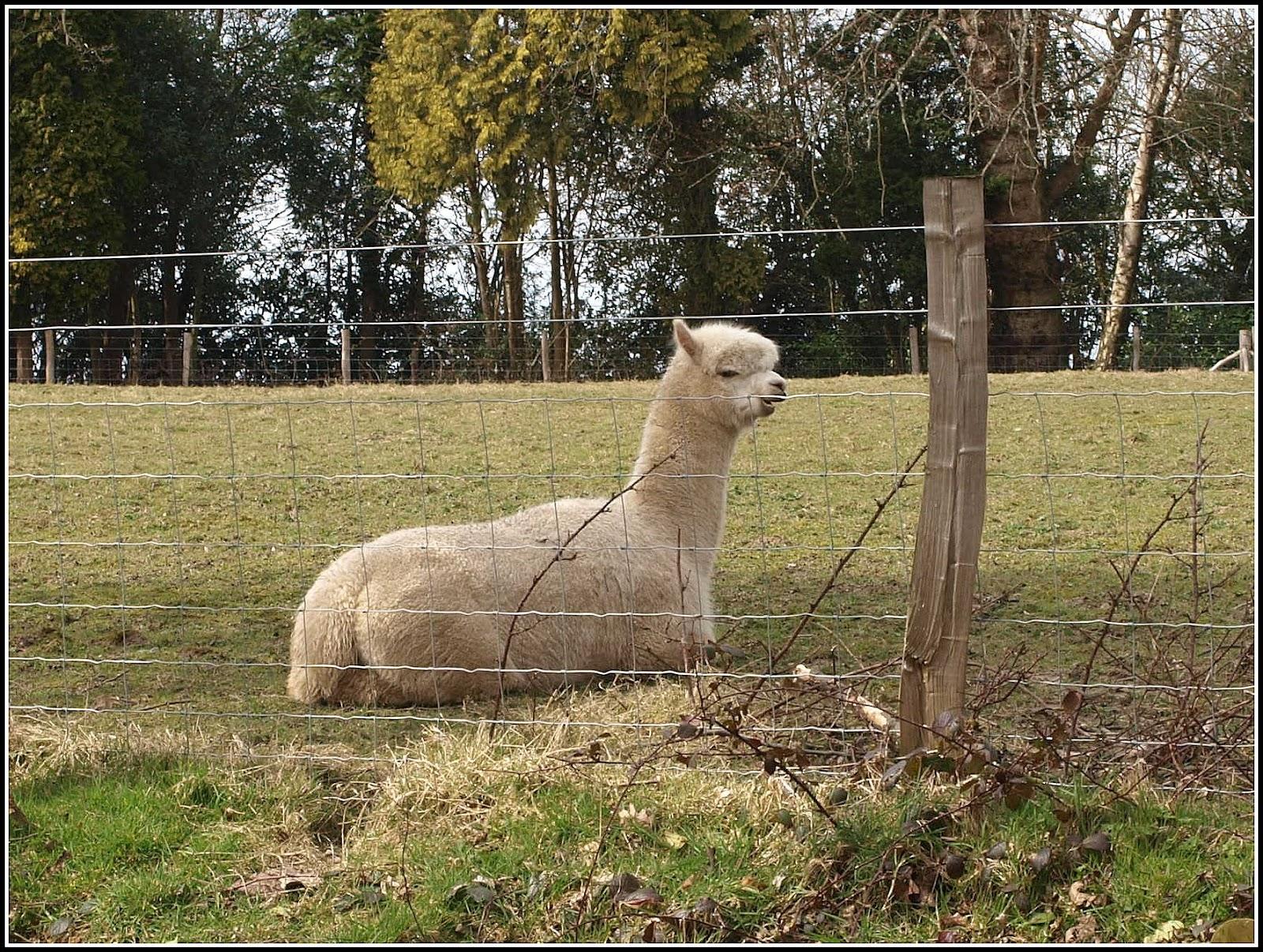 Mark 39 s veg plot celebrating retirement for Alpaca view farm cuisine