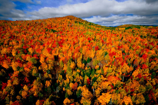 Mountain Autumn Color Tree Landscape Photography