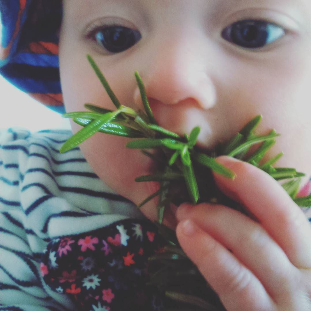 Outdoor Activities for Babies: Tasting Herbs