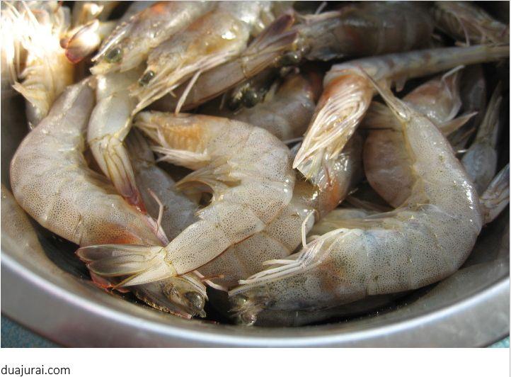 Pakan Ikan Arwana Udang