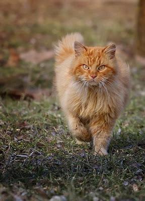 قتال قطة ضد مجموعة كلاب