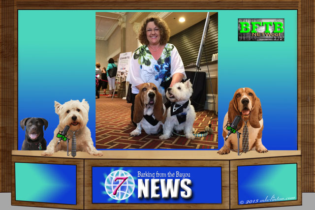 Basset Hound, West Highland Terrier, Chocolate Lab delivering the news