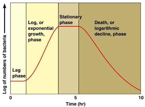 Microorganisms growth