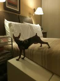 rampa para camas