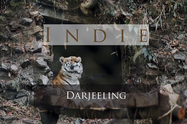 Indie: Darjeeling, czyli ostatni przystanek w Indiach