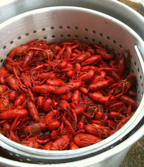 local, NC, seafood, NCDAC, aquaculture, good eats, New Bern, crawfish, tilapia, striped bass, oysters, NC eats, Got To Be NC, NC