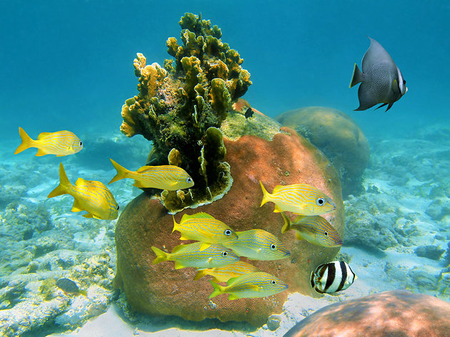 Andros Island,Bahamas