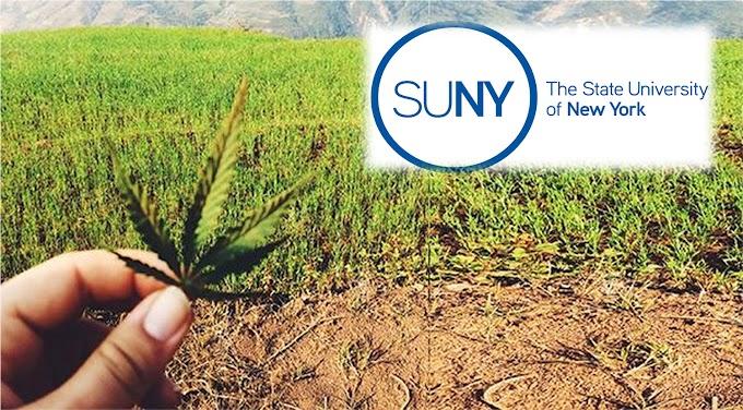 Universidad Estatal de Nueva York enseñará estudiantes a cosechar marihuana