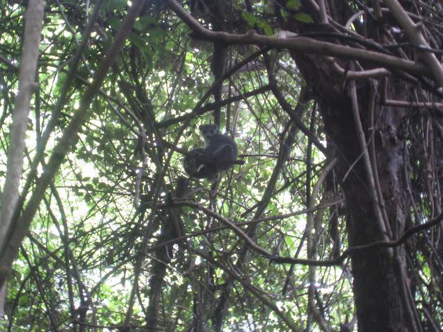lemur ankarana national park