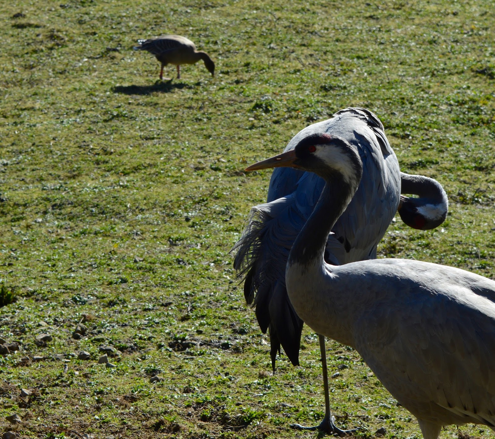 WWT Washington Wetland Centre | An Accessible North East Day Out for the Whole Family - cranes