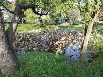 花博記念公園鶴見緑地 北東の角にある蓮池