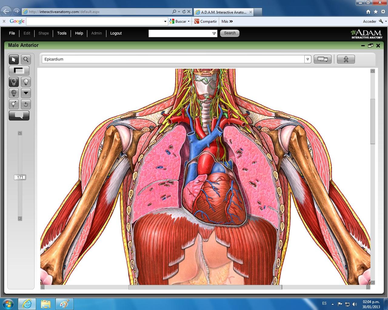 Puntero De Ubicación Con Un Corazón: Resumen Del Sistema Circulatorio
