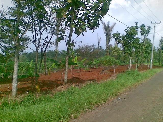 Foto(5086) Jual Tanah | Tanah Di jual, luas 4,25 ha kebun jual tanah di puncak