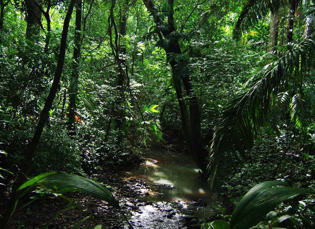biodiversity rainforest - photo #1