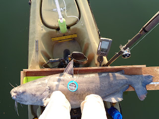 Kayak Catfishing Tournaments