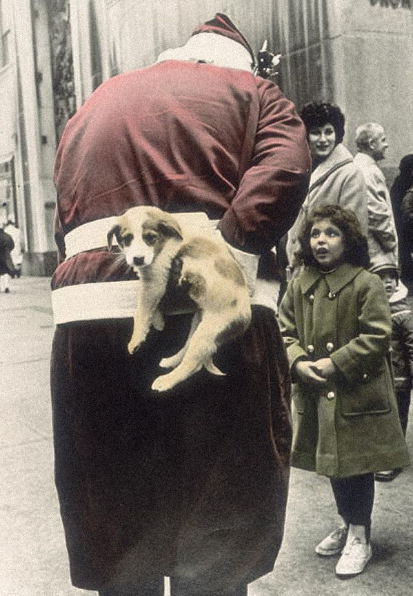 Tinted photo c.1960s  Santa hold puppy behind his back to give to a little girl. A Pleasant Christmas Story and other stories of Christmas Creepers. marchmatron.com