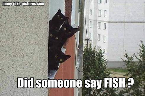 Did someone say fish?
