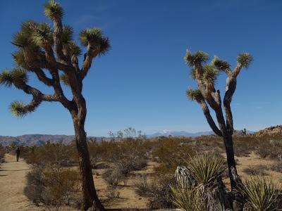 Joshua Tree National Park California Rocks Willow Hole Trail Hike