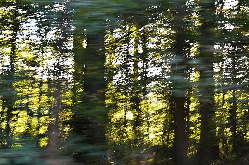 arbre foret nature vertige reve voyage poesie