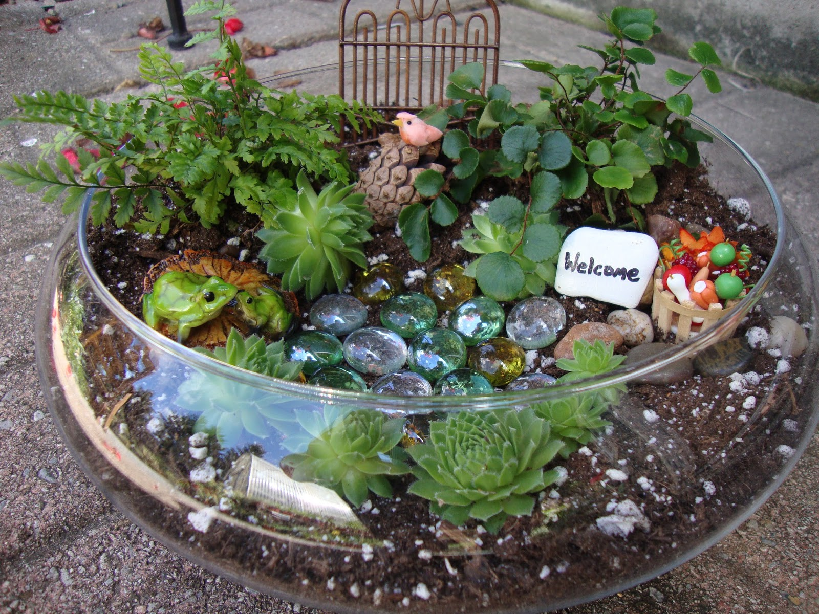 Brendens garden center miniature terrarium gardens - Miniature plants for fairy gardens ...