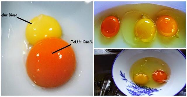 Tidak Semua Telur Itu Sehat, Berikut Cara Membedakan Telur Ayam Sehat Dan yang Tidak Sehat...Baca Selengkapnya