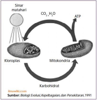 gambar ilustrasi dari proses fotosintesis