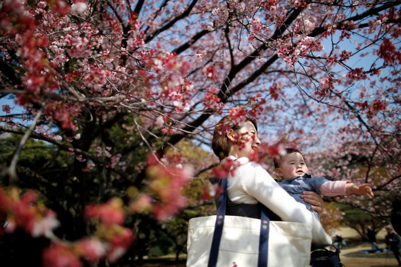 Tokyo's parks, temple grounds, schools and streets will explode in pinks and whites. Huge picnic areas where friends, family and colleagues gather to celebrate.