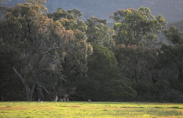 Kangaroo's Sparring