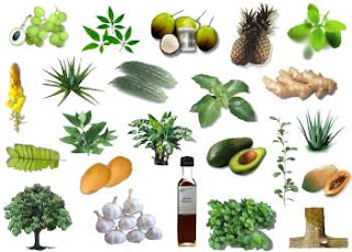 How To Treat Ailments Fast With 6 Natural Remedies