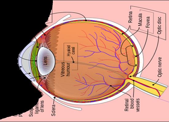 Indera yang biasa disebut dengan Panca Indera Bagian-bagian penting pada Mata, serta fungsinya