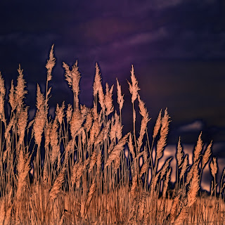 gunadesign guna andersone abstract photography beach grass