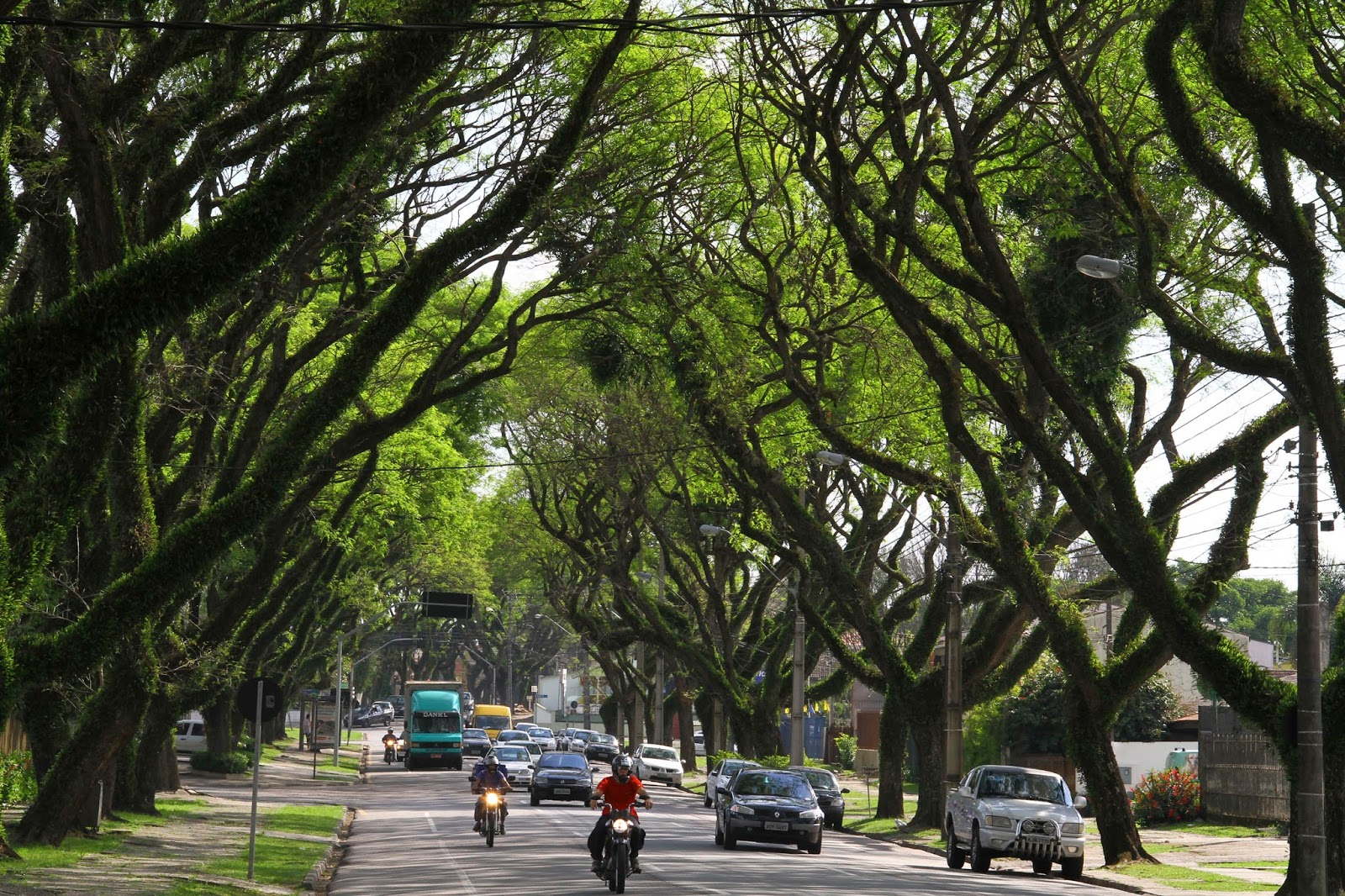 Conheça as árvores que compõem a paisagem de Curitiba