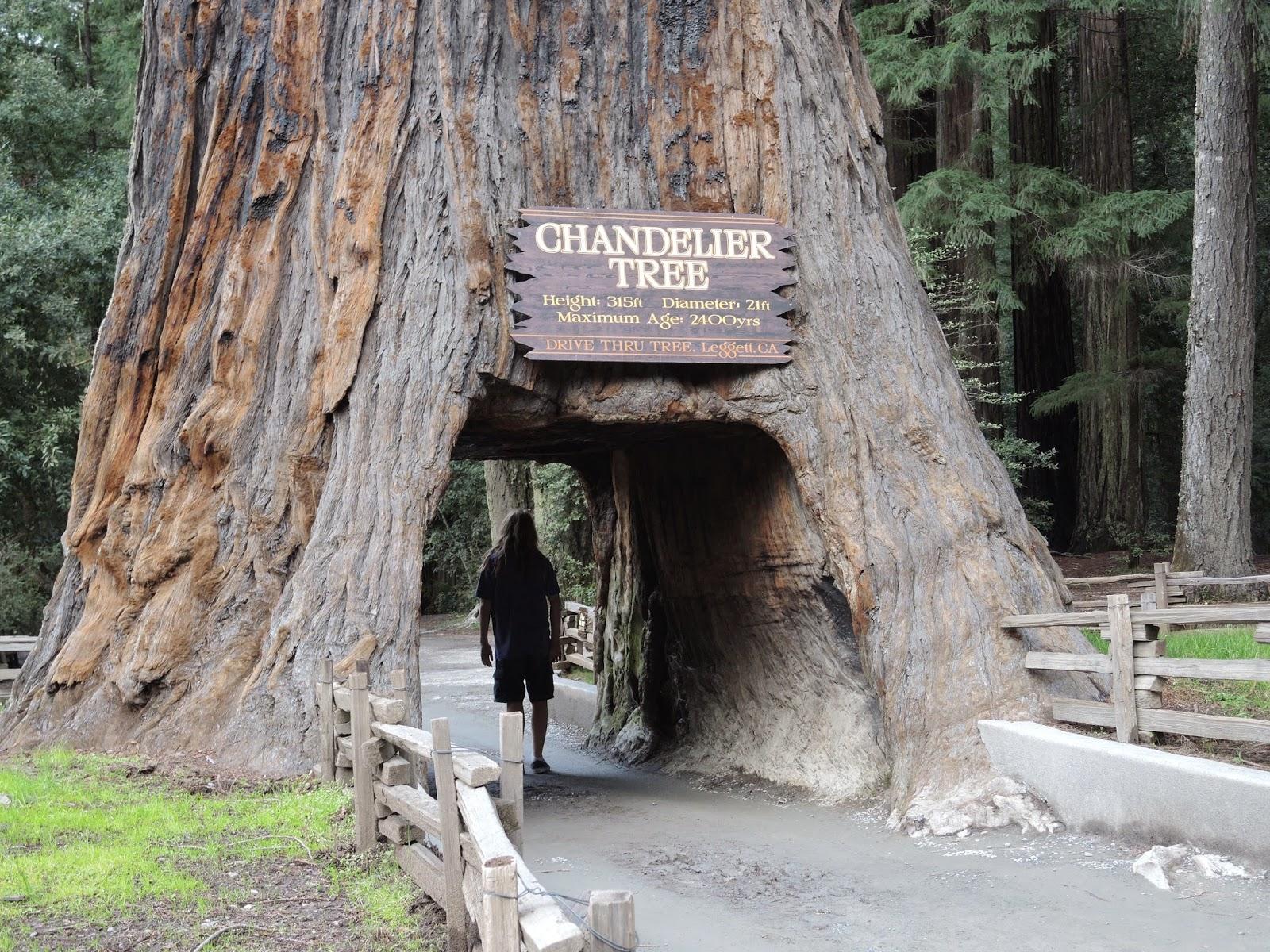 Redwood national park 11