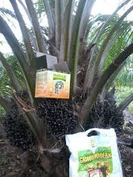 pupuk untuk pembesar buah sawit