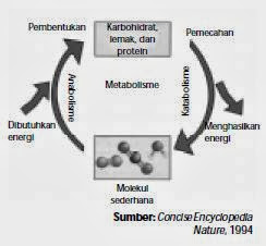 Pengertian Anabolisme pada Tumbuhan