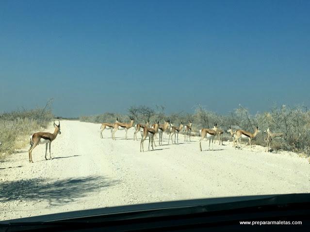 carreteras durante el safari por Namibia