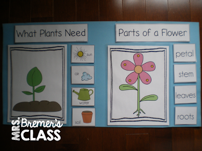 Spring theme- learning about plants and the plant life cycle in Kindergarten and First Grade